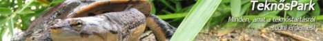TeknősPark - Ismerkedés a teknősökkel
